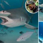 Бесстрашный дайвер использует кровь, чтобы приманить 5-метровых акул-молотов