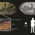 Найденную в Антарктиде странную окаменелость наконец опознали