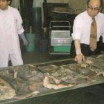 Коллекция татуированной человеческой кожи Фукуси Масаити