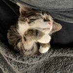 Фото приколы про спящих, смешных Животных (20 фото)