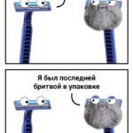 Смешные мемы и картинки с надписями