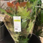 Британскую сеть супермаркетов раскритиковали за продажу осенних листьев за 7,5 долларов