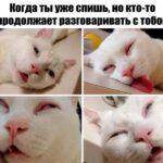 Мемы и смешные картинки с надписями