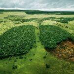 Действительно ли леса — это легкие планеты