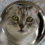 Узнают ли животные себя в зеркале