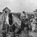 Что русские выращивали вогороде докартошки