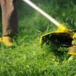 Почему трава вызывает зуд