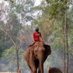 На Шри-Ланке запретили пьяное вождение слонов