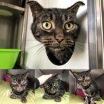 В Нидерландах кот выжил, оказавшись запертым 52 дня в доме без еды. Он ел бумагу