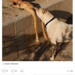 Смешные комментарии из социальных сетей, часть 133-лучшее