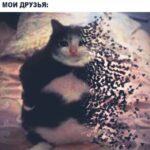 Смешные картинки для поднятия настроения