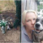 Пёс три года жил на могиле хозяина
