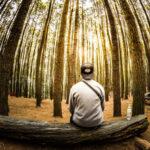 Два способа, как измерить высоту дерева, не забираясь на него