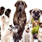 Почему собаки лают