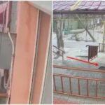 Россияне расследовали дерзкую кражу коврика