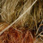 Экосистема домашнего ковра: Какой мир прячется под мягким ворсом?