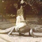 Фото детей верхом на аллигаторах