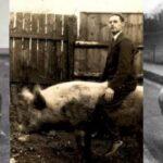 Как в Ирландском Корха Дорха устроили скачки на свиньях (но все кончилось — хуже не придумаешь)