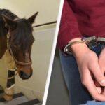 Американца арестовали после того, как полиция нашла пропавшую лошадь в его спальне