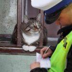 Россиянка написала заявление на кота Пушка за то, что он дразнит собак и охотится на птиц
