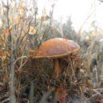 Существование грибного сознания: миф или реальность